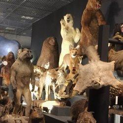 上野博物館の哺乳類展