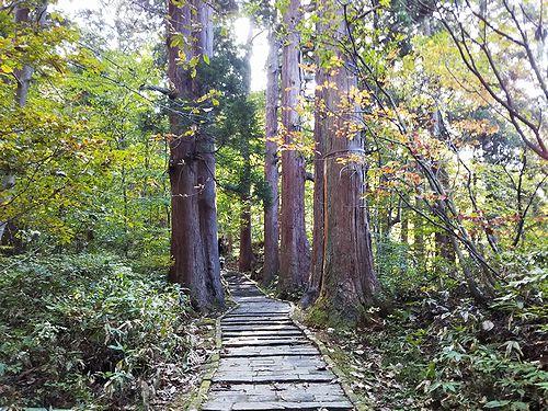 20181023山形県鶴岡市、出羽三山神社・五重塔 (15)