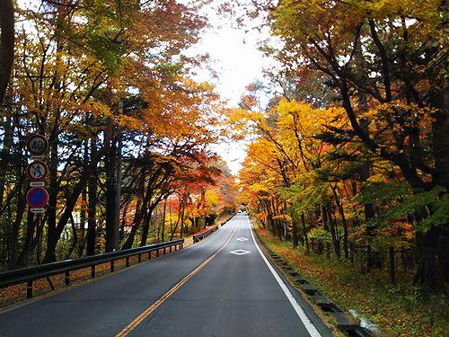 20181101長野県軽井沢町、国道146号線の紅葉1