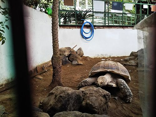 20181121草津温泉の観光名所、草津熱帯圏8