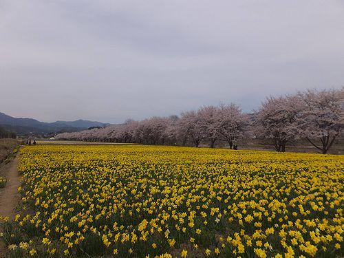 20190417東吾妻町岩井親水公園 (8)