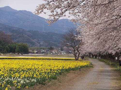 20190417東吾妻町岩井親水公園 (9)
