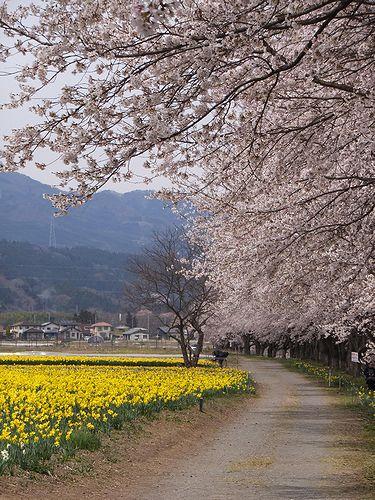 20190417東吾妻町岩井親水公園 (10)