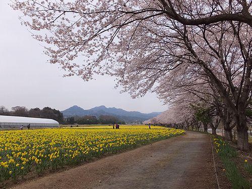 20190417東吾妻町岩井親水公園 (11)