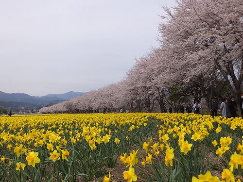 20190417東吾妻町岩井親水公園 (2)
