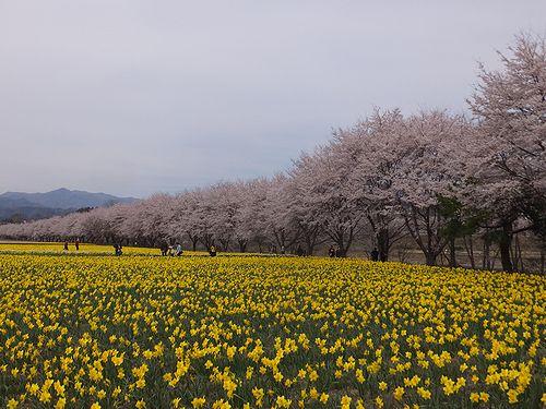 20190417東吾妻町岩井親水公園 (3)