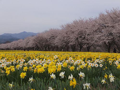 20190417東吾妻町岩井親水公園 (4)