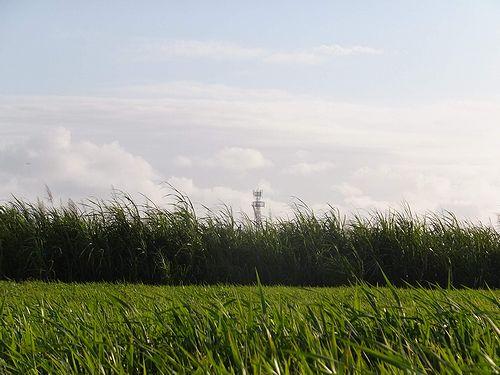 20190219沖縄県糸満市の風景 (2)