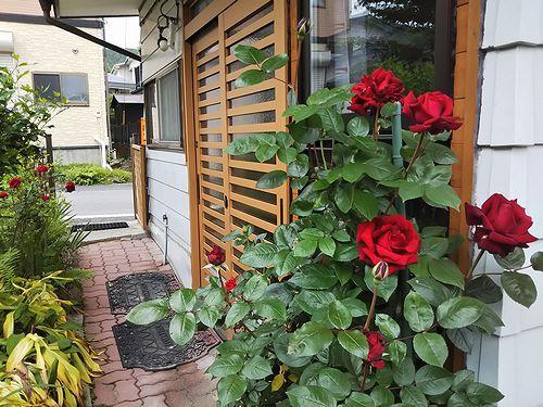 20190702草津温泉民泊花栞(はなしおり)エントランスに咲くバラ (2)