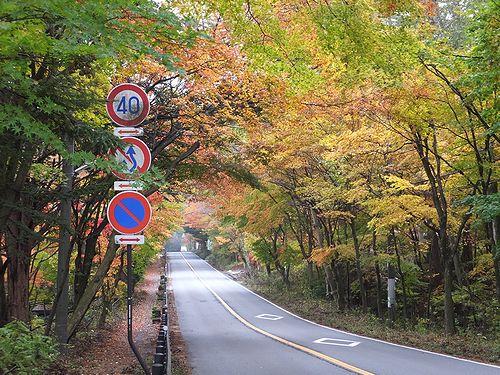 20191030長野県軽井沢町、国道146号線の紅葉のトンネル