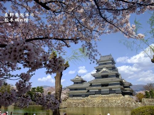 20140424長野県松本市、松本城の桜 (2)