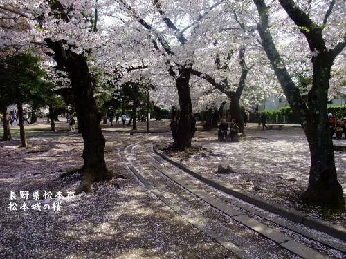 20140424長野県松本市、松本城の桜 (1)