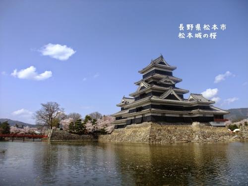 20140424長野県松本市、松本城の桜 (3)
