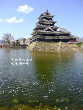 20140424長野県松本市、松本城の桜 (4)