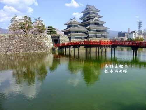 20140424長野県松本市、松本城の桜 (8)