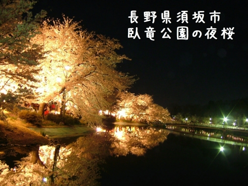 20060425長野県須坂市、臥竜公園の夜桜ライトアップ (1)