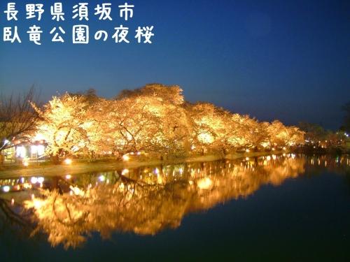 20060425長野県須坂市、臥竜公園の夜桜ライトアップ (2)