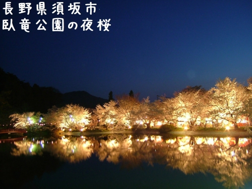 20060425長野県須坂市、臥竜公園の夜桜ライトアップ (3)
