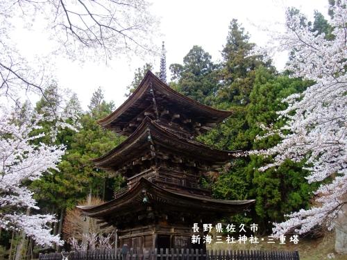 20110426長野県佐久市、新海三社神社・三重塔の桜 (1)