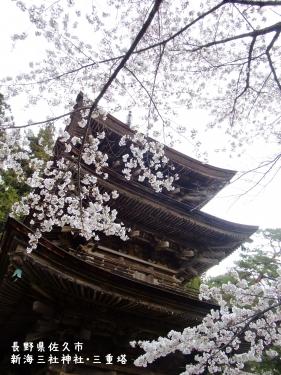 20110426長野県佐久市、新海三社神社・三重塔の桜 (2)