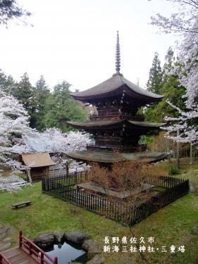 20110426長野県佐久市、新海三社神社・三重塔の桜 (3)