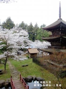 20110426長野県佐久市、新海三社神社・三重塔の桜 (4)