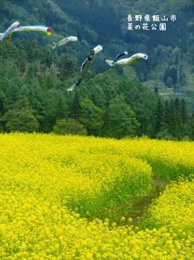 20120507長野県飯山市、菜の花公園 (1)