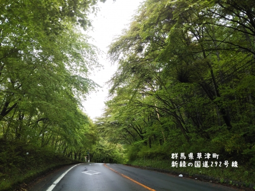 20200520群馬県草津町、新緑の国道292号線 (1)