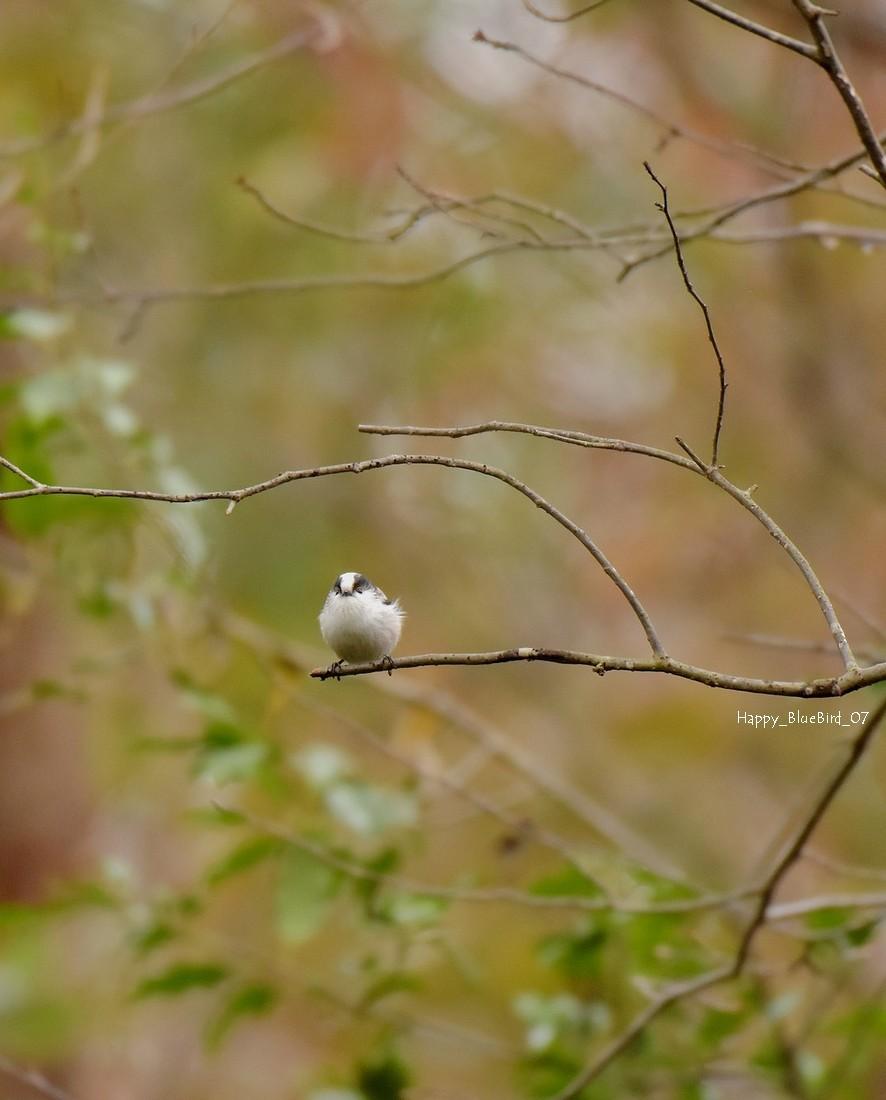 DSC_2932-エナガ(正面)blog-fb