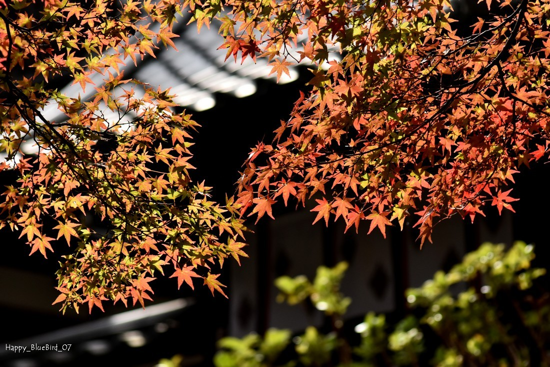 DSC_8825-長谷寺-blog