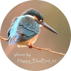 Happy_Bluebird_07