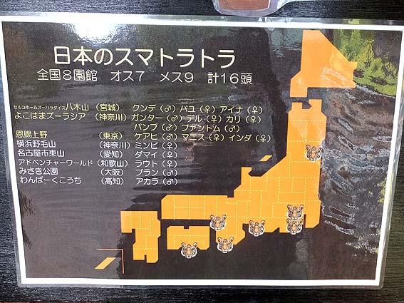 日本のスマトラトラ