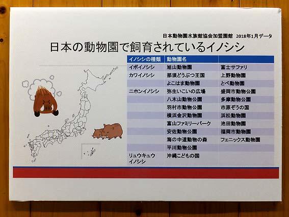 日本の動物園で飼育されているイノシシ
