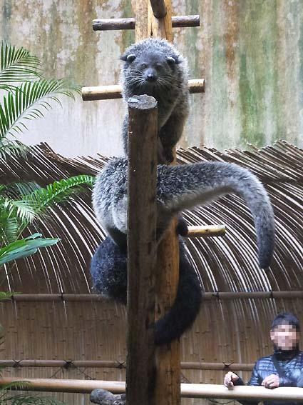 のいち動物公園のピントロング