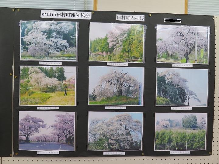田村町の桜