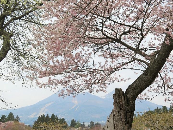 八幡神社より