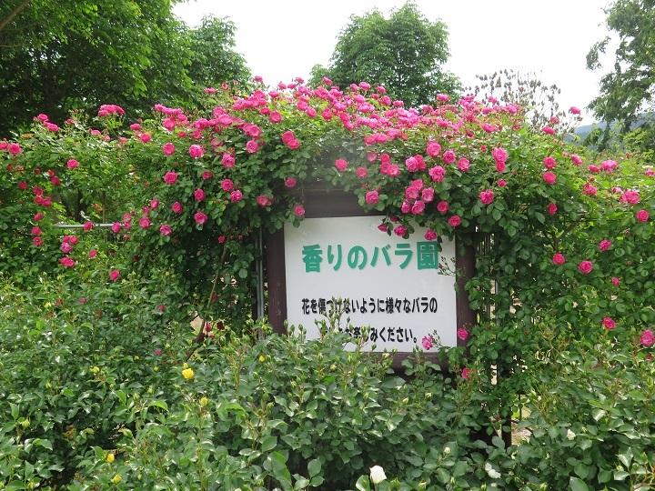 香のバラ園