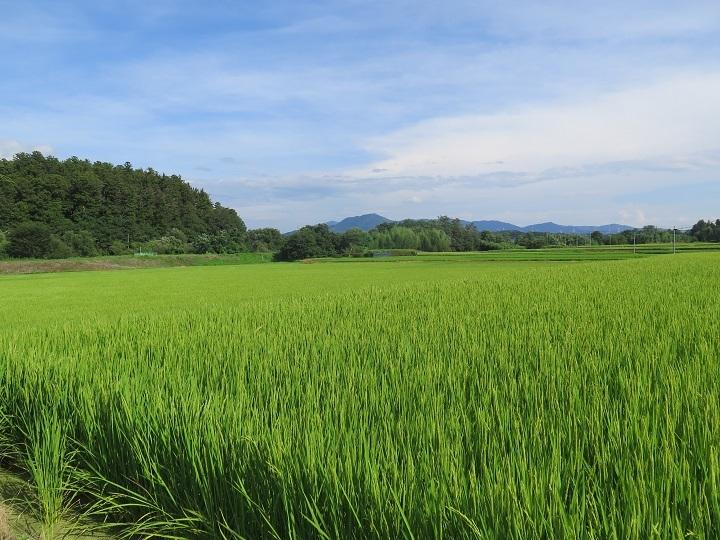 田村神社と宇津峰