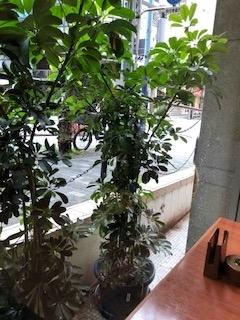 パリジェンヌ窓側 (1)