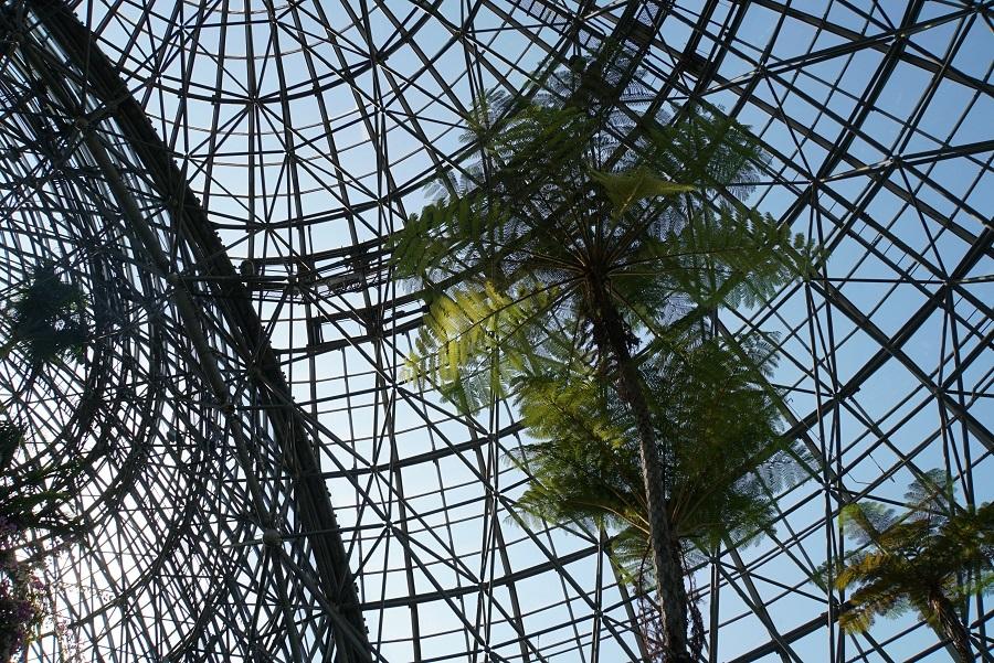 夢の島熱帯植物館2019070210