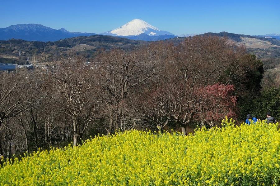 吾妻山2019021101