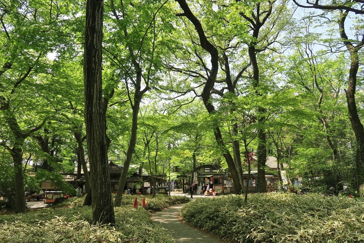 神代植物公園2019042808