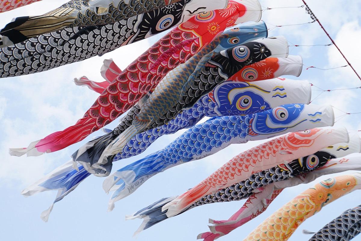 相模川鯉のぼり2019050503