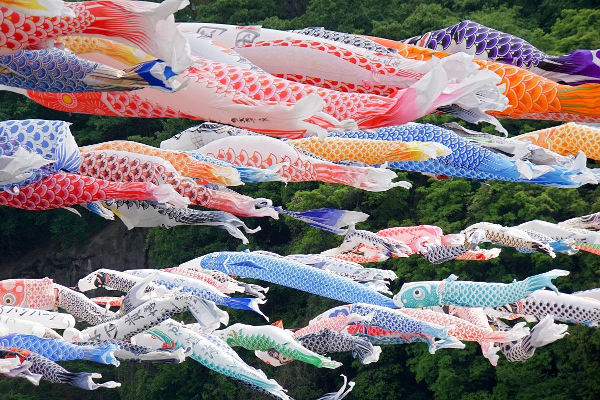 相模川鯉のぼり2019050506