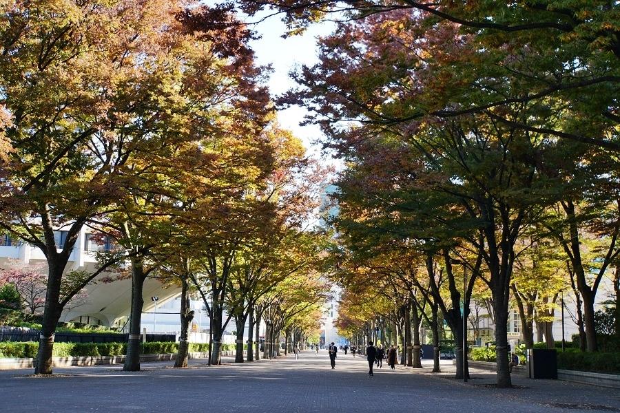 代々木公園2018120302