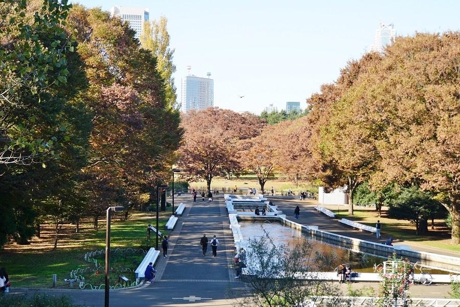 代々木公園2018120303
