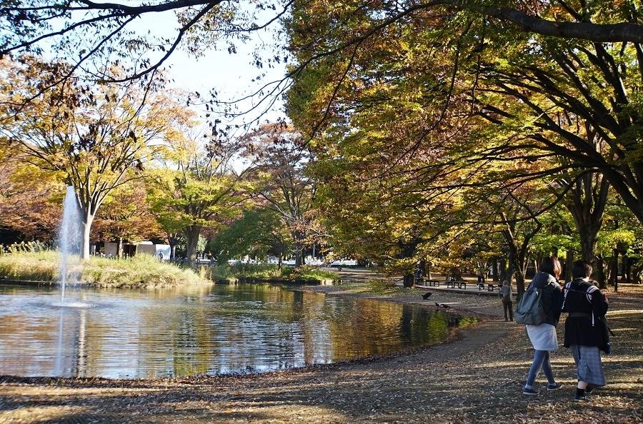 代々木公園2018120307