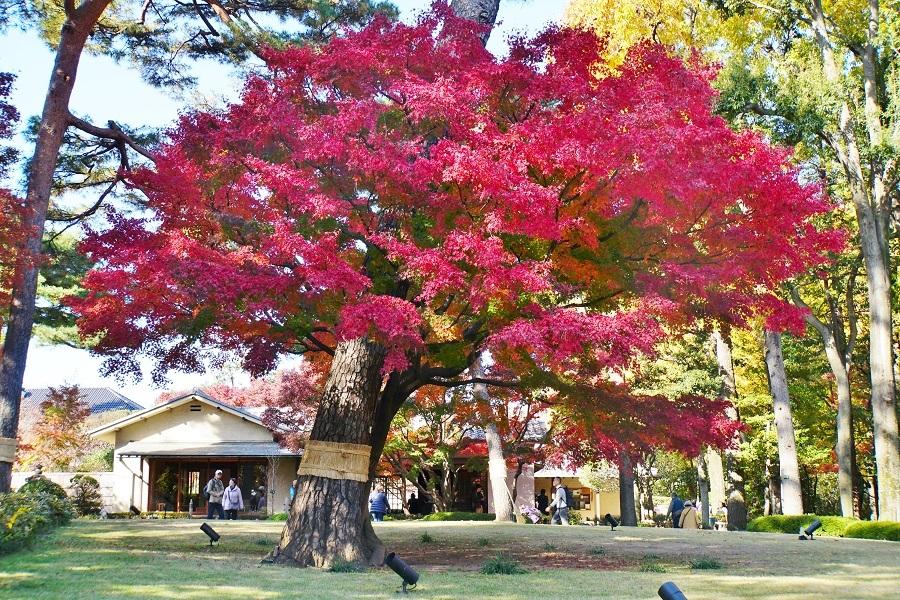 大田黒公園2018121405