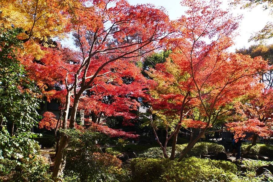 大田黒公園2018121406