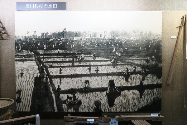 旭川兵村水田風景2020031904